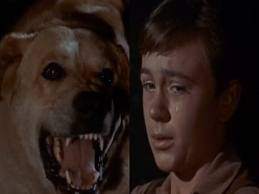 I used to be the kids and now I am the rabid dog